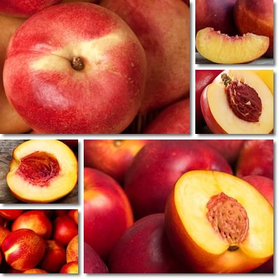 Nectarines glycemic index