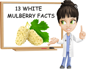 White mulberries facts