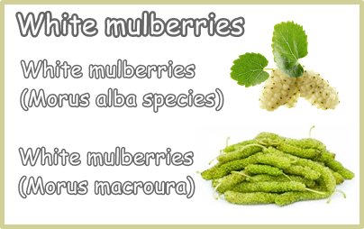 White mulberries types