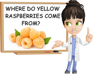Where do yellow raspberries come from