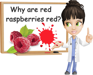 Why are raspberries red